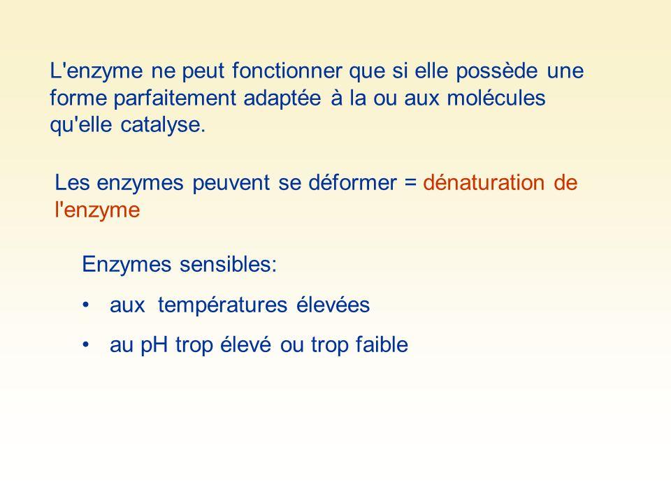 L enzyme ne peut fonctionner que si elle possède une forme parfaitement adaptée à la ou aux molécules qu elle catalyse.