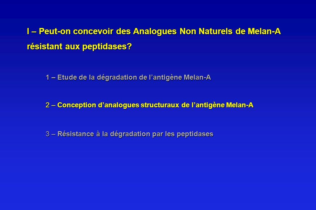 I – Peut-on concevoir des Analogues Non Naturels de Melan-A résistant aux peptidases
