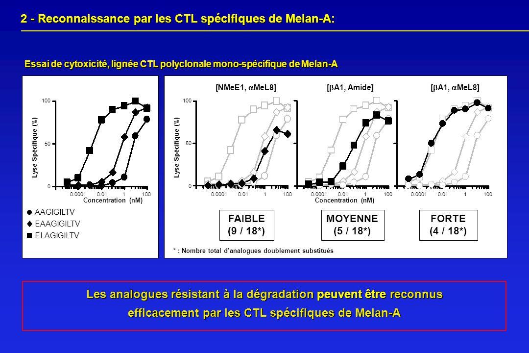 2 - Reconnaissance par les CTL spécifiques de Melan-A: