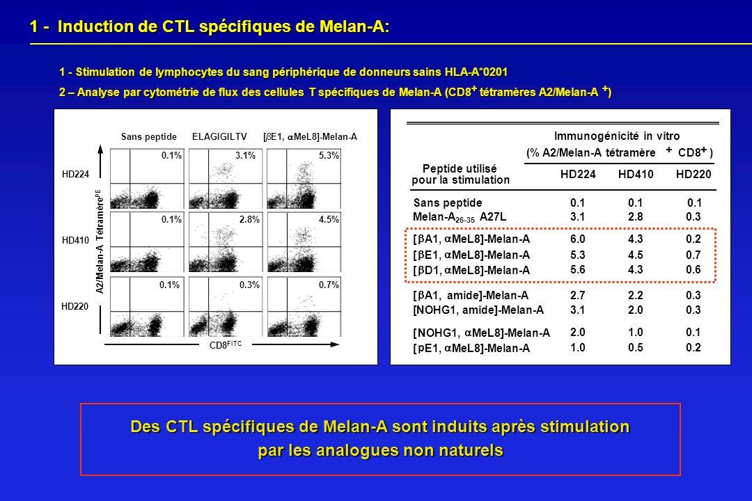 A2/Melan-A TétramèrePE