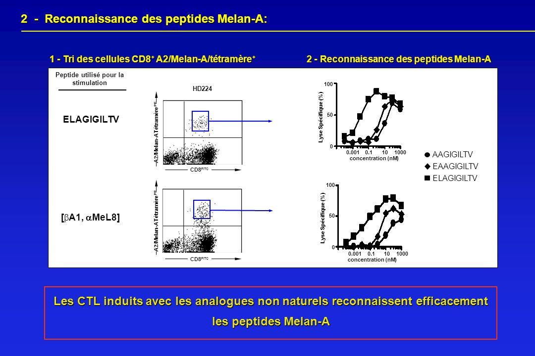 2 - Reconnaissance des peptides Melan-A: