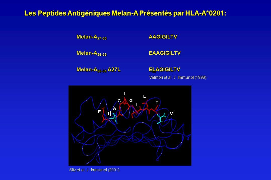Les Peptides Antigéniques Melan-A Présentés par HLA-A*0201: