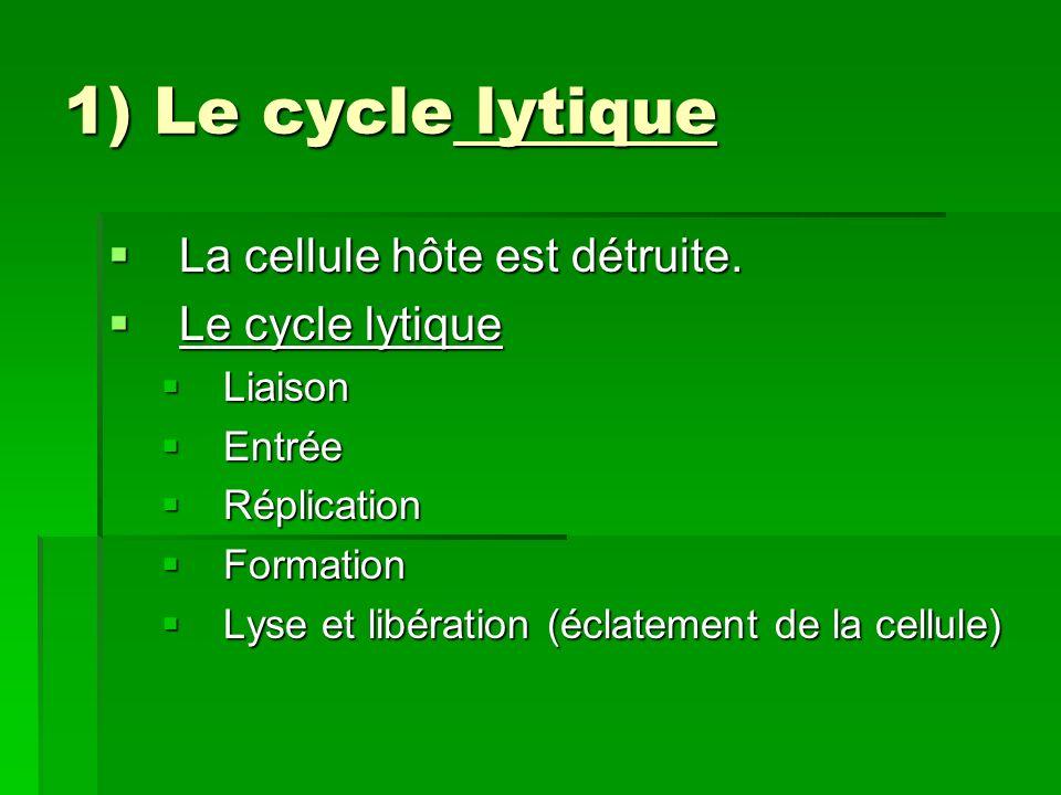 1) Le cycle lytique La cellule hôte est détruite. Le cycle lytique