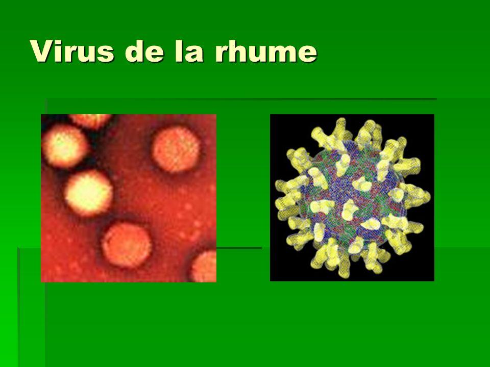 Virus de la rhume