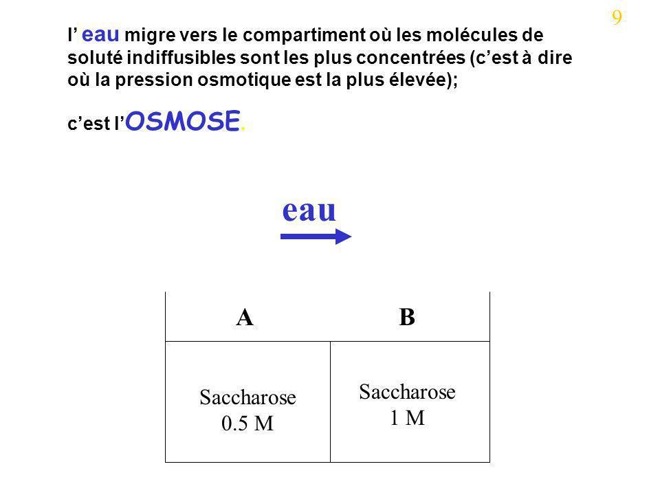 eau A B 9 Saccharose 1 M Saccharose 0.5 M