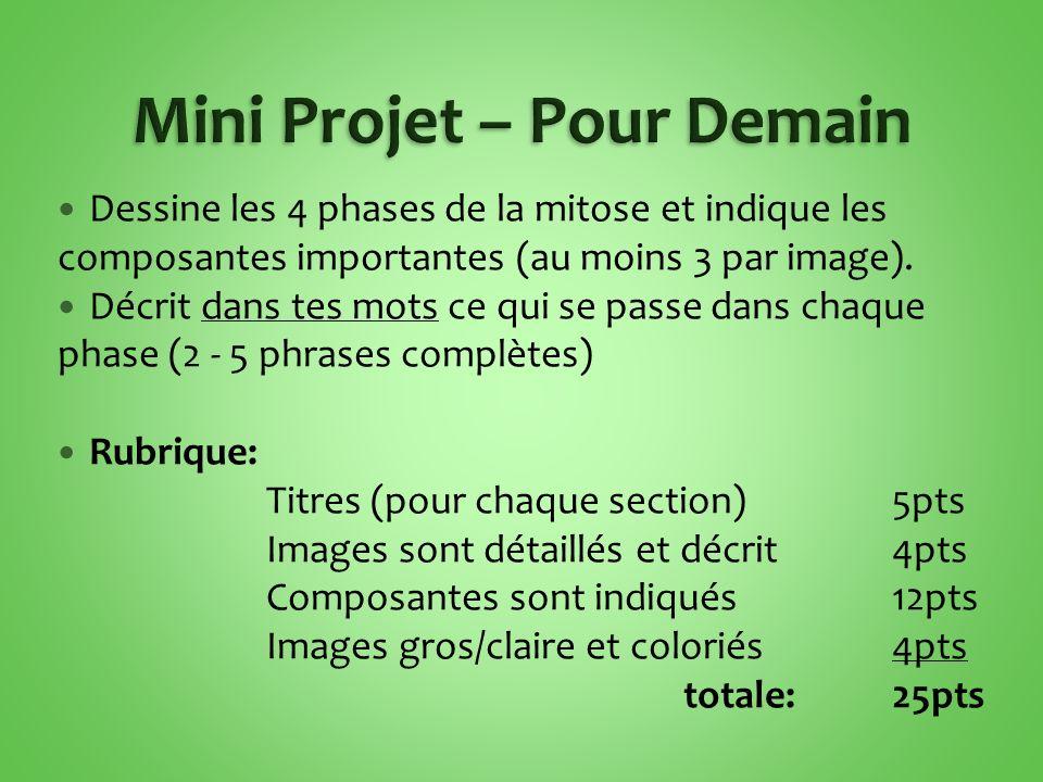 Mini Projet – Pour Demain