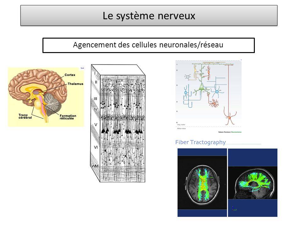 Agencement des cellules neuronales/réseau