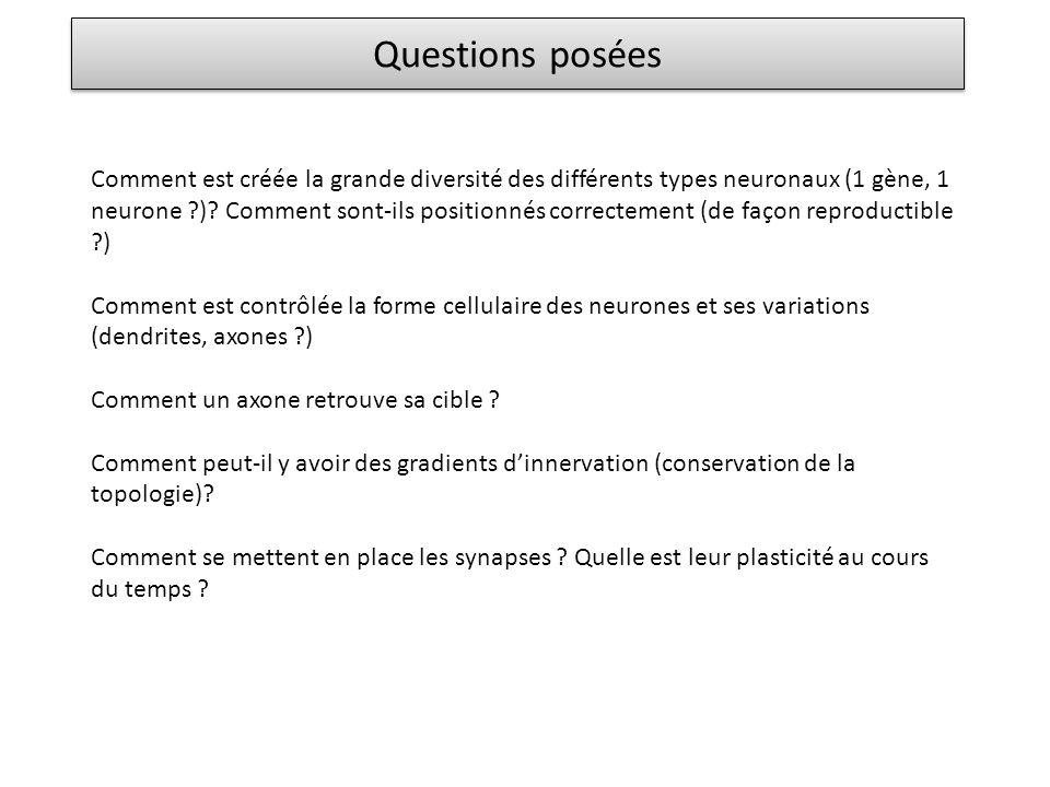 Questions posées