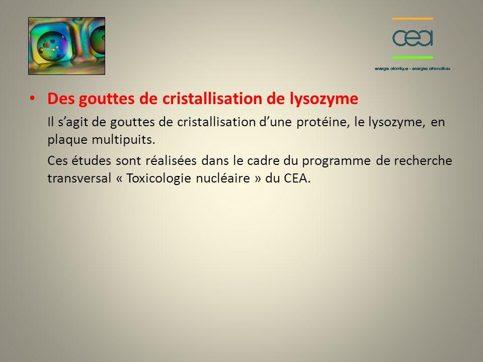 Des gouttes de cristallisation de lysozyme