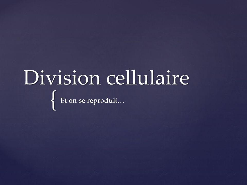 Division cellulaire Et on se reproduit…