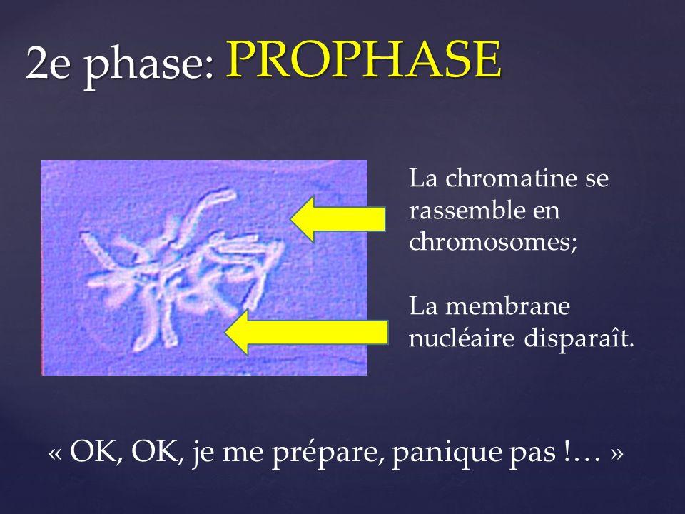 PROPHASE 2e phase: « OK, OK, je me prépare, panique pas !… »