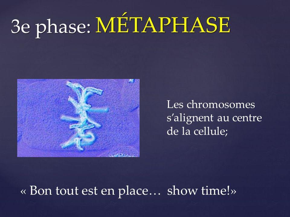 MÉTAPHASE 3e phase: « Bon tout est en place… show time!»