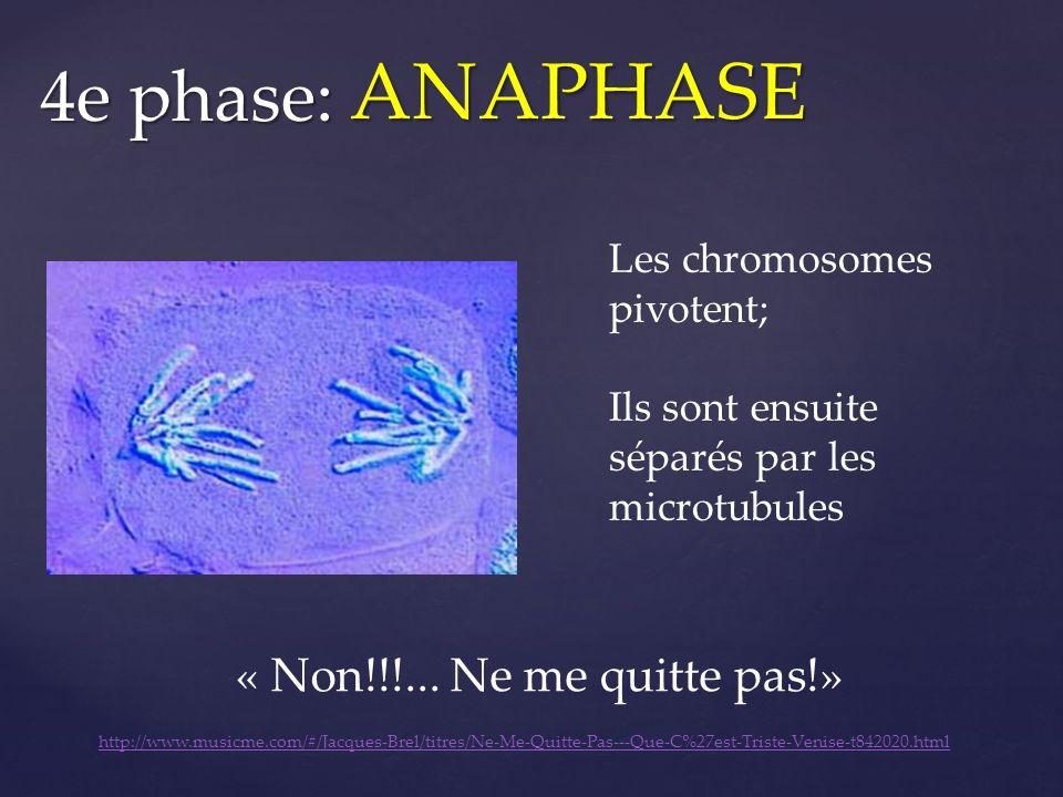 ANAPHASE 4e phase: « Non!!!... Ne me quitte pas!»