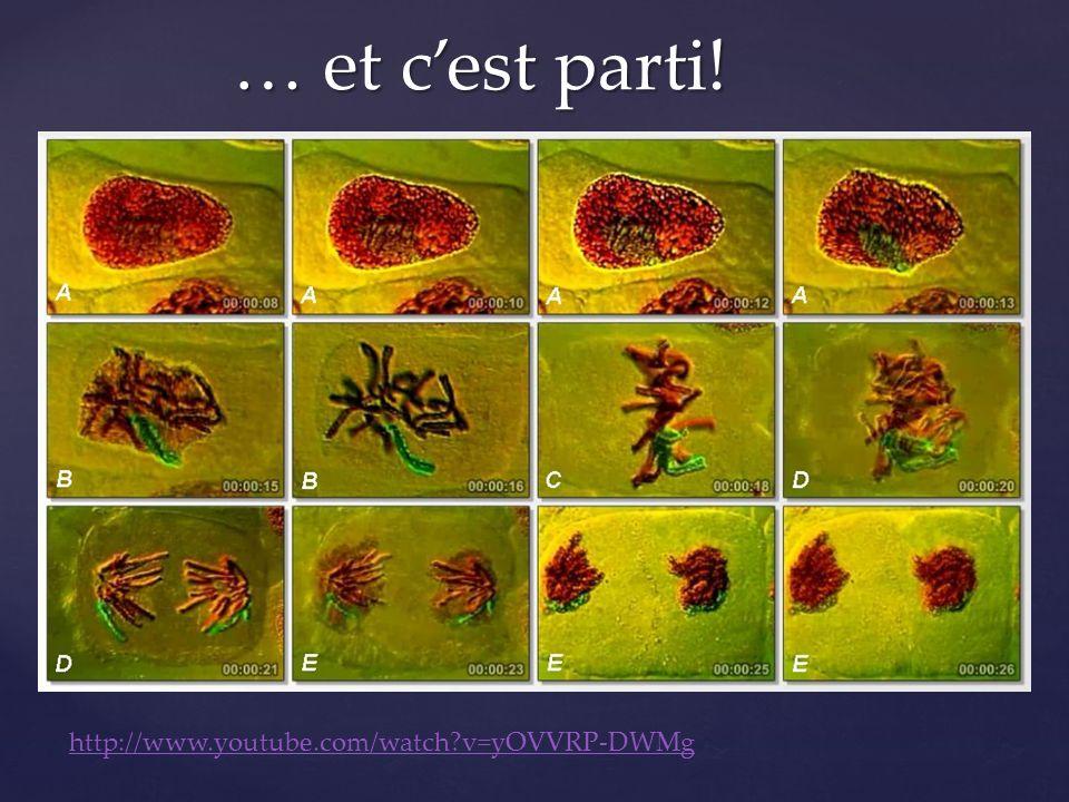 … et c'est parti! http://www.youtube.com/watch v=yOVVRP-DWMg