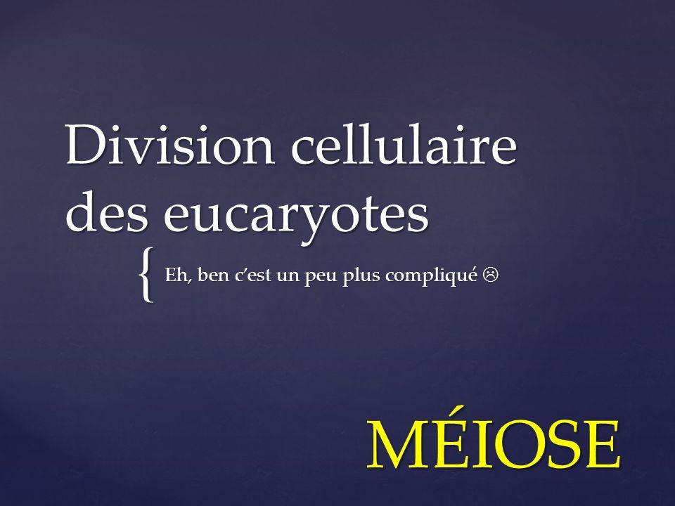 Division cellulaire des eucaryotes