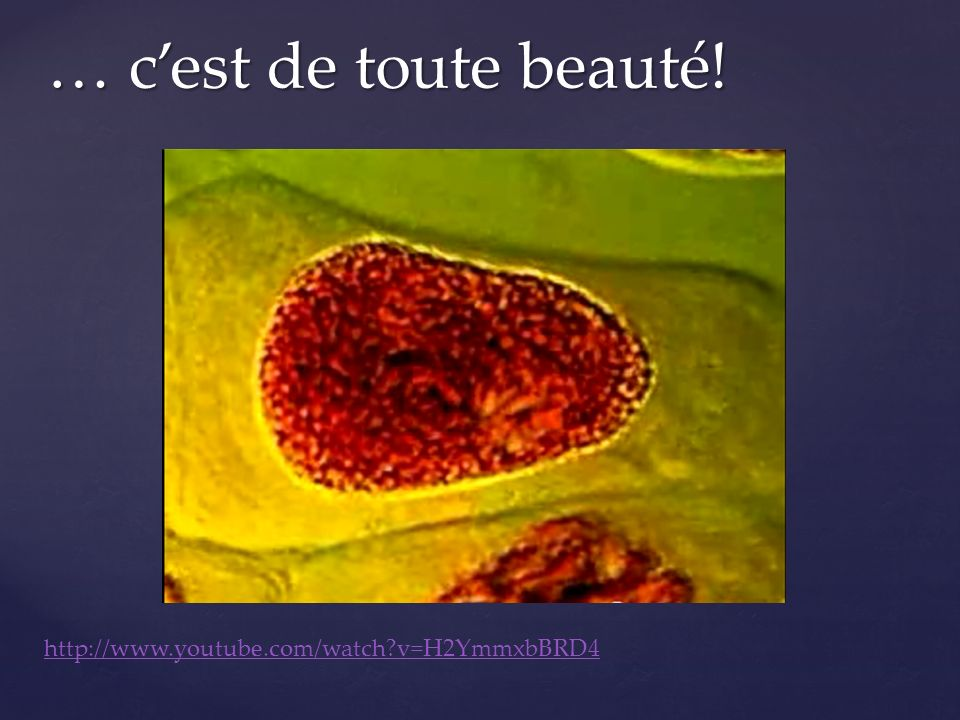 … c'est de toute beauté! http://www.youtube.com/watch v=H2YmmxbBRD4
