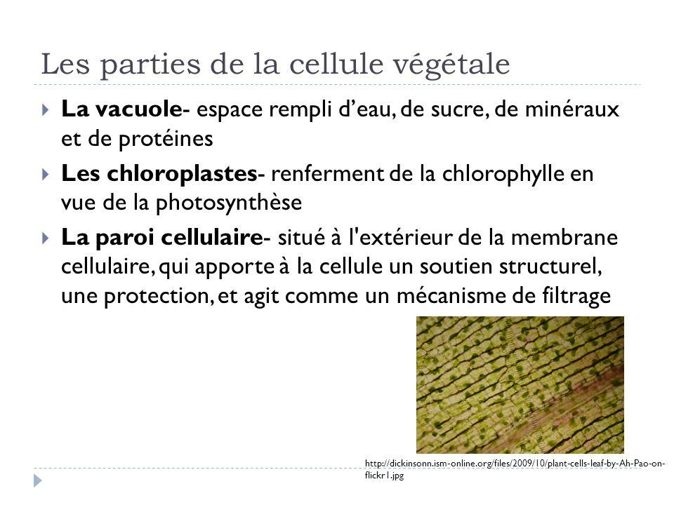 Les parties de la cellule végétale