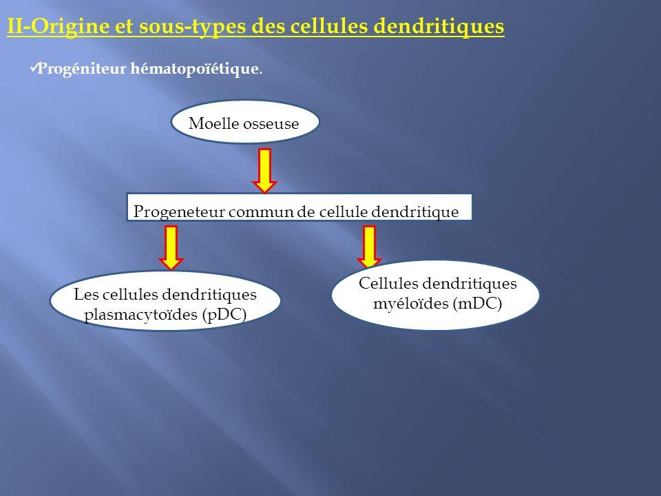 II-Origine et sous-types des cellules dendritiques