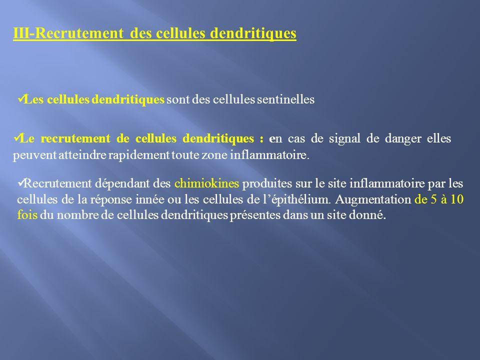 III-Recrutement des cellules dendritiques