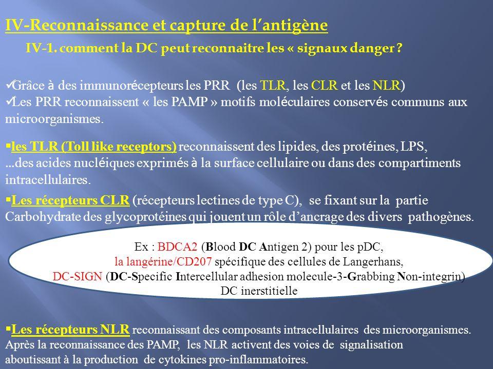 IV-Reconnaissance et capture de l'antigène