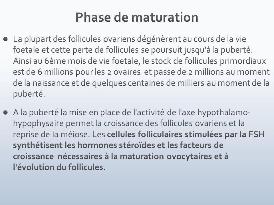 Phase de maturation