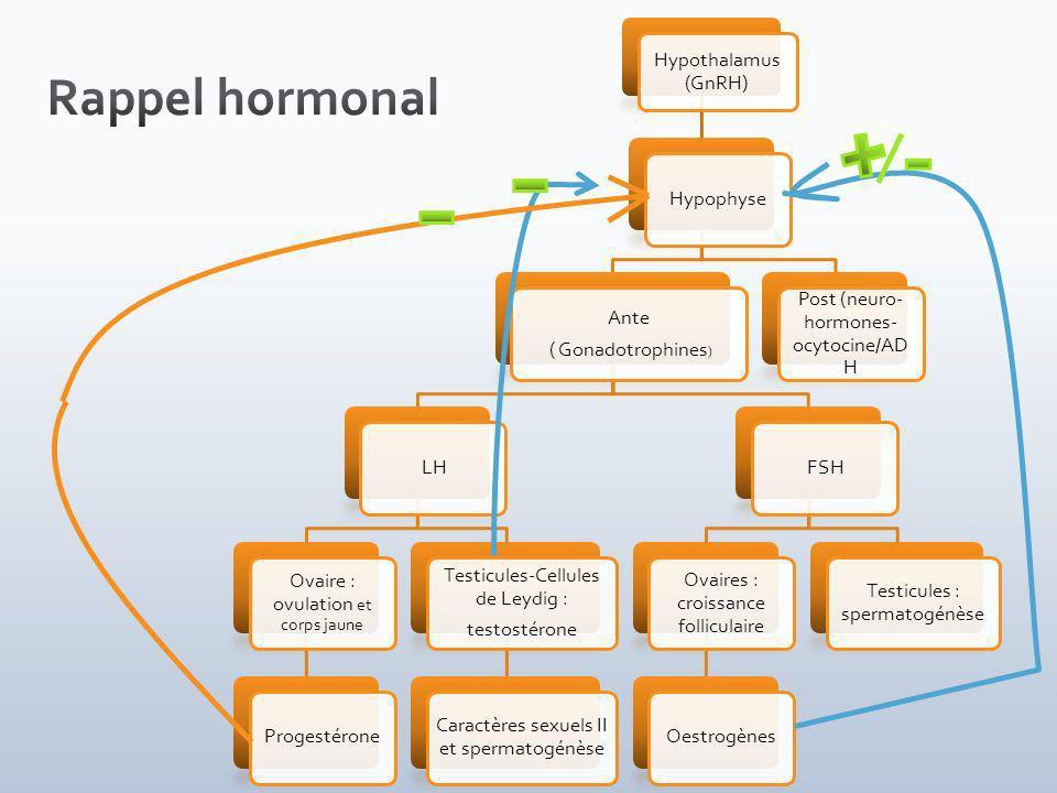 Rappel hormonal Hypothalamus (GnRH) Hypophyse Ante ( Gonadotrophines)