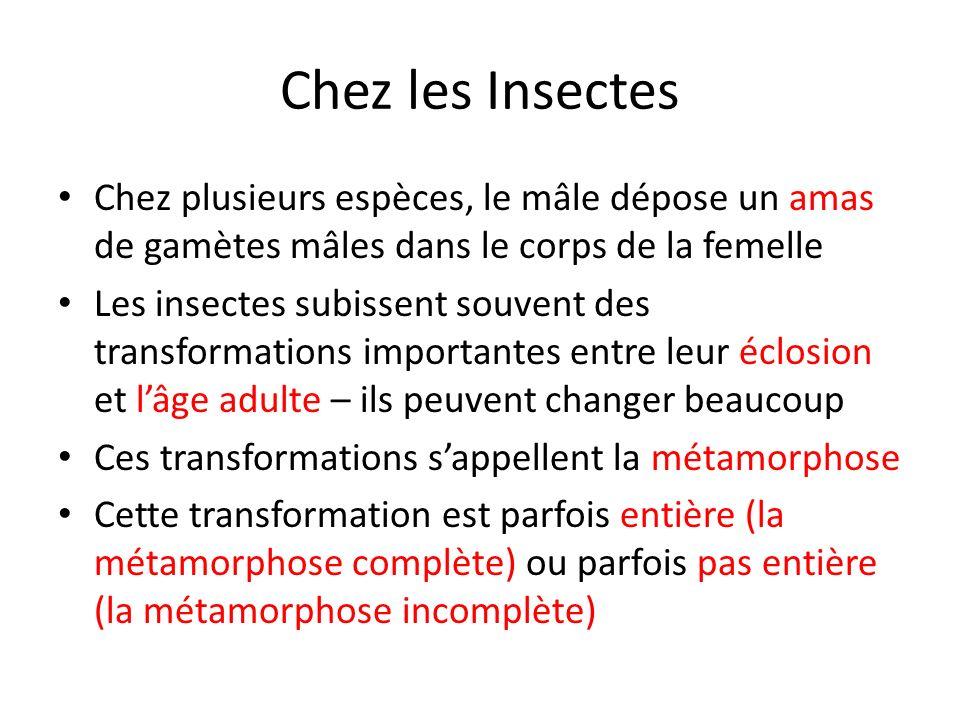 Chez les Insectes Chez plusieurs espèces, le mâle dépose un amas de gamètes mâles dans le corps de la femelle.