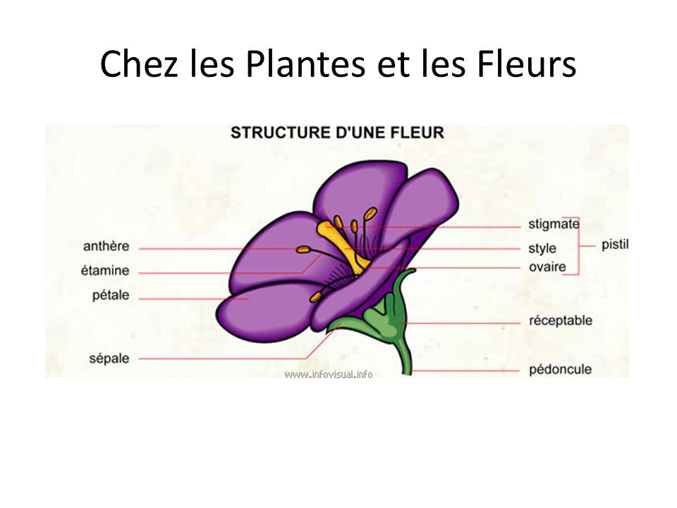 Chez les Plantes et les Fleurs