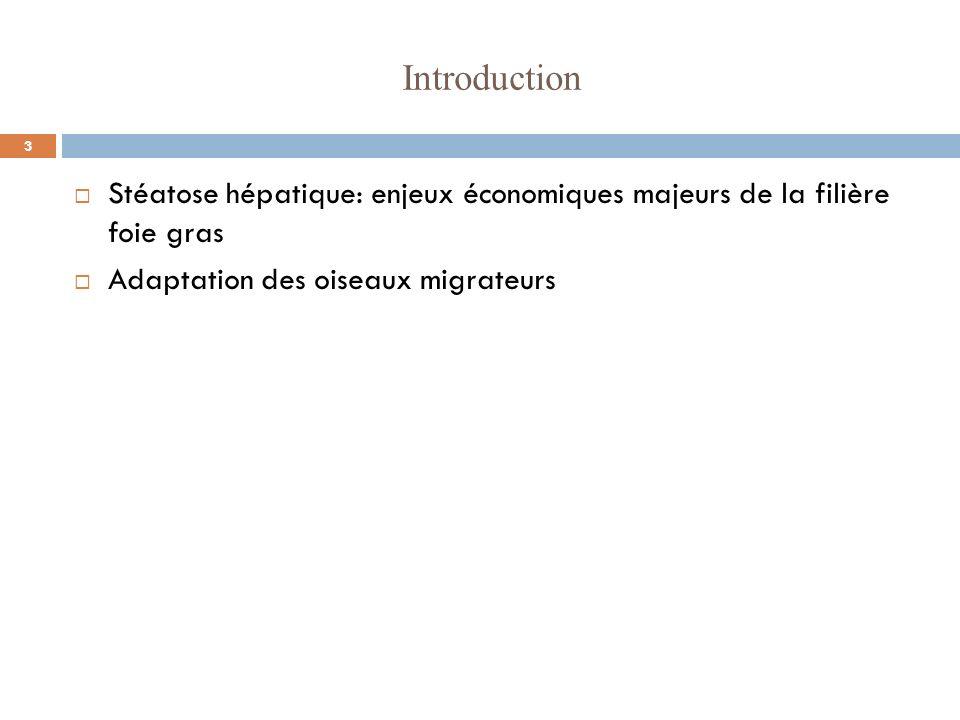 Introduction Stéatose hépatique: enjeux économiques majeurs de la filière foie gras.