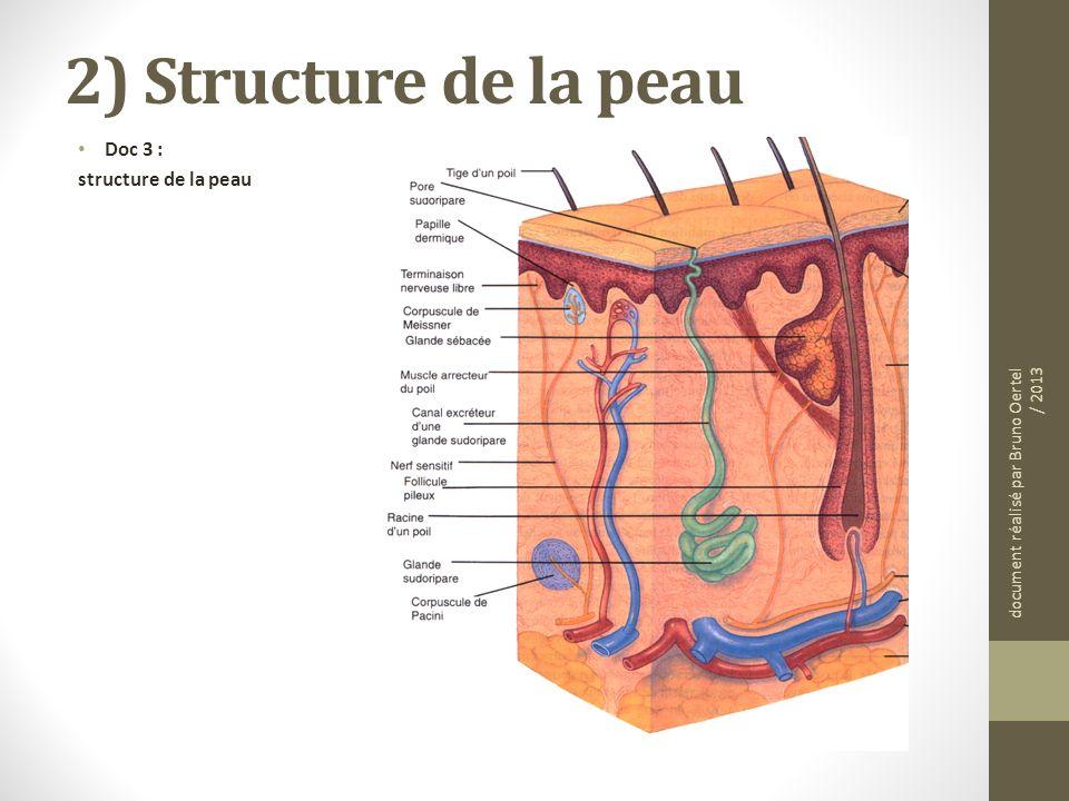 2) Structure de la peau Doc 3 : structure de la peau