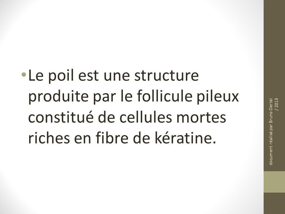 Le poil est une structure produite par le follicule pileux constitué de cellules mortes riches en fibre de kératine.