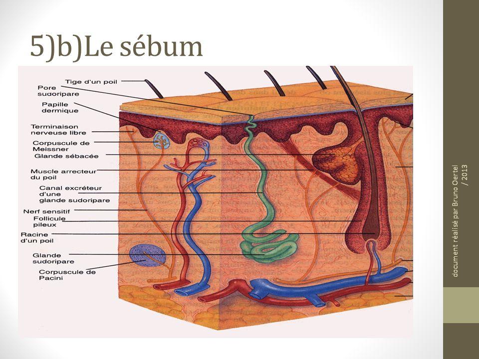 5)b)Le sébum C'est un liquide composé de matières grasses (lipides) produit par les glandes sébacées (voir doc 3)