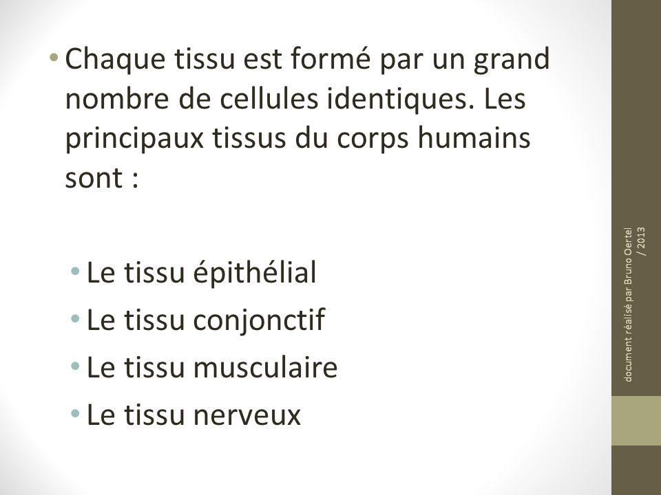 Chaque tissu est formé par un grand nombre de cellules identiques