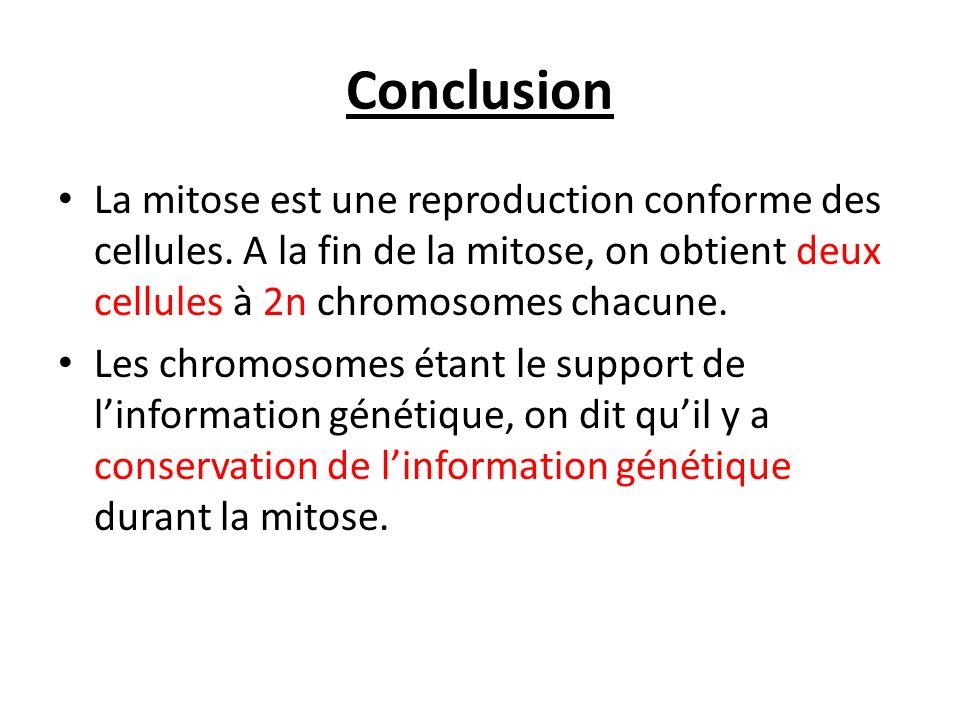 Conclusion La mitose est une reproduction conforme des cellules. A la fin de la mitose, on obtient deux cellules à 2n chromosomes chacune.