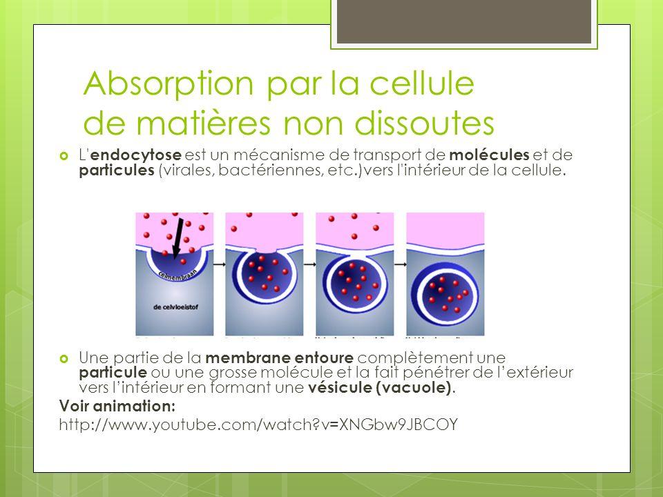 Absorption par la cellule de matières non dissoutes