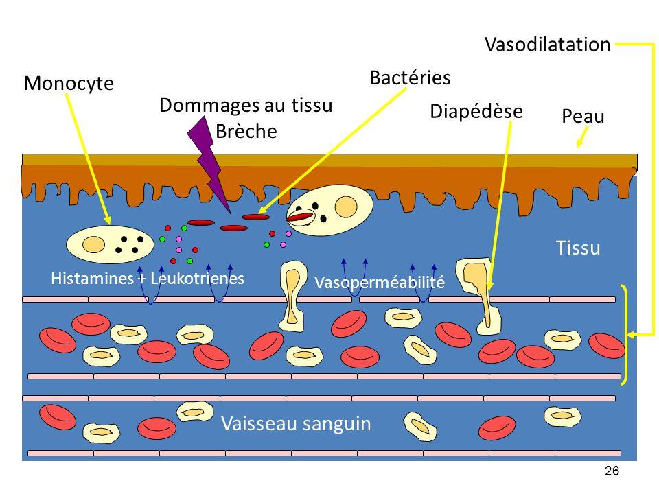 Vasodilatation Bactéries Monocyte Dommages au tissu Diapédèse Brèche
