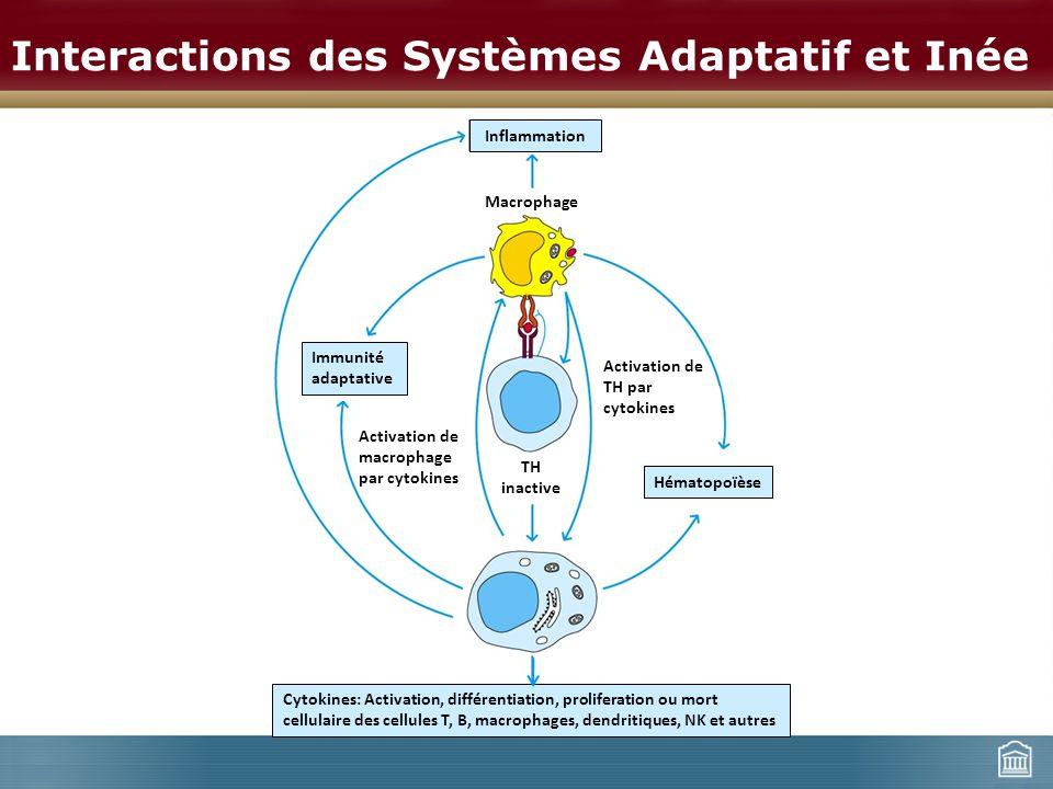 Interactions des Systèmes Adaptatif et Inée