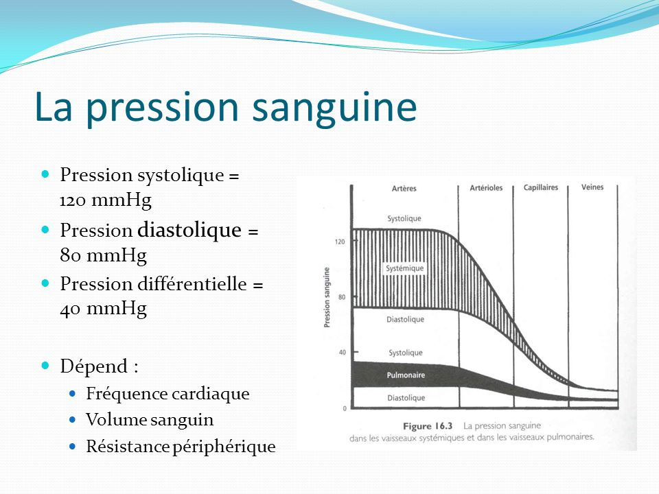 La pression sanguine Pression systolique = 120 mmHg