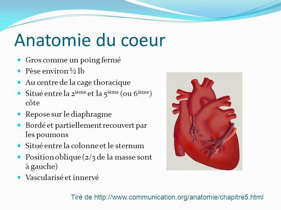 Anatomie du coeur Gros comme un poing fermé Pèse environ ½ lb