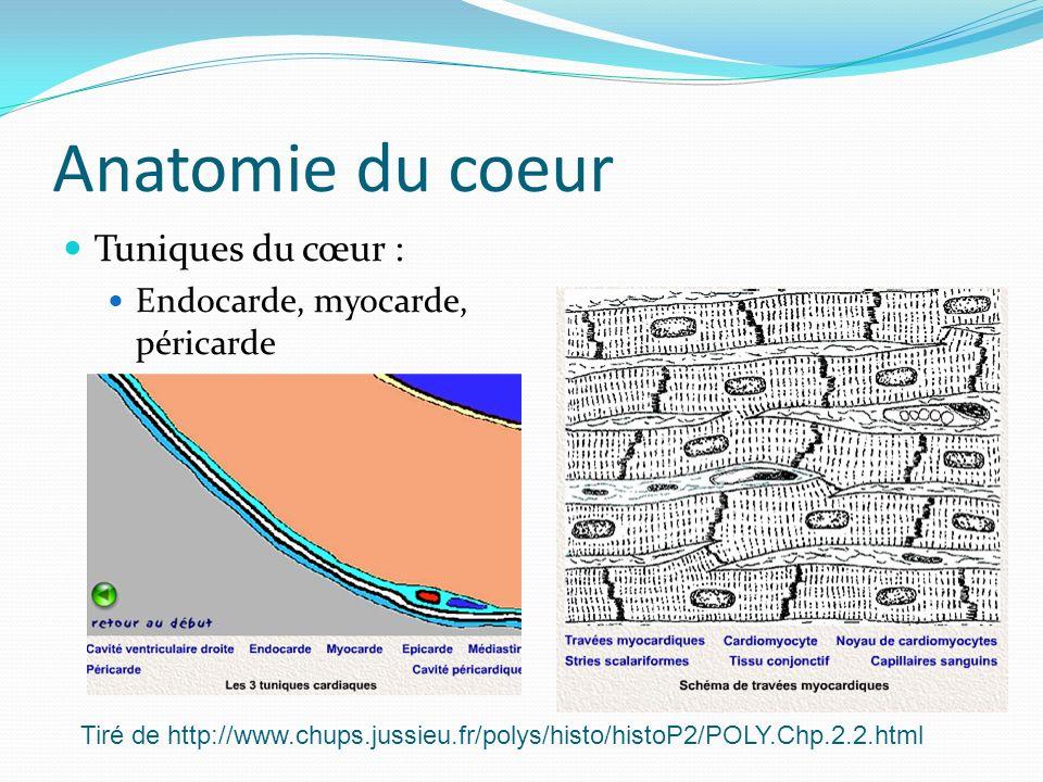 Anatomie du coeur Tuniques du cœur : Endocarde, myocarde, péricarde