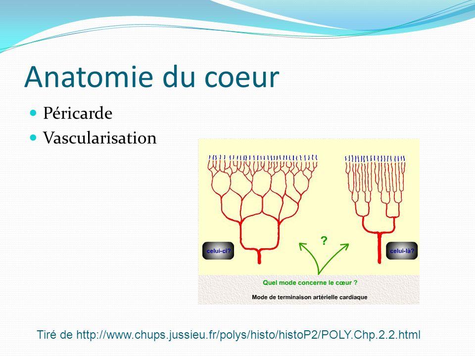 Anatomie du coeur Péricarde Vascularisation