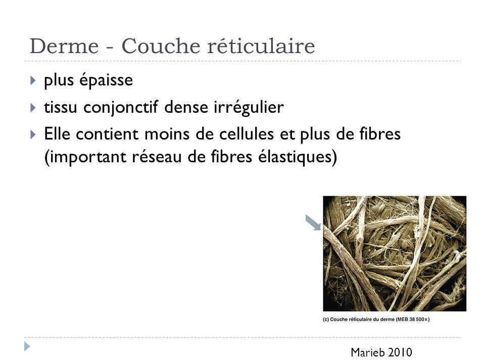 Derme - Couche réticulaire