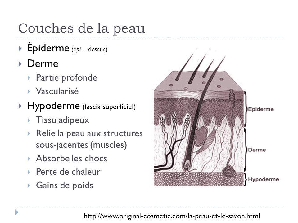 Couches de la peau Épiderme (épi – dessus) Derme