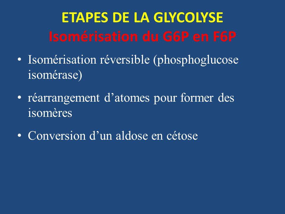 ETAPES DE LA GLYCOLYSE Isomérisation du G6P en F6P