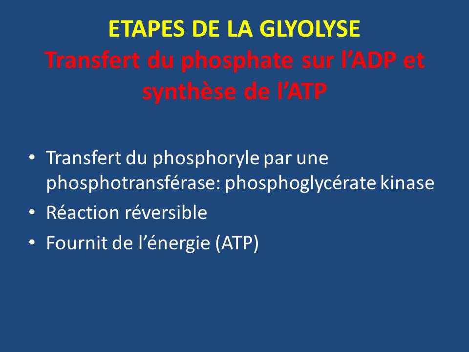 ETAPES DE LA GLYOLYSE Transfert du phosphate sur l'ADP et synthèse de l'ATP