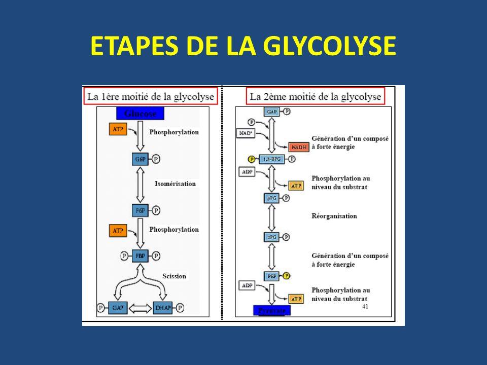 ETAPES DE LA GLYCOLYSE