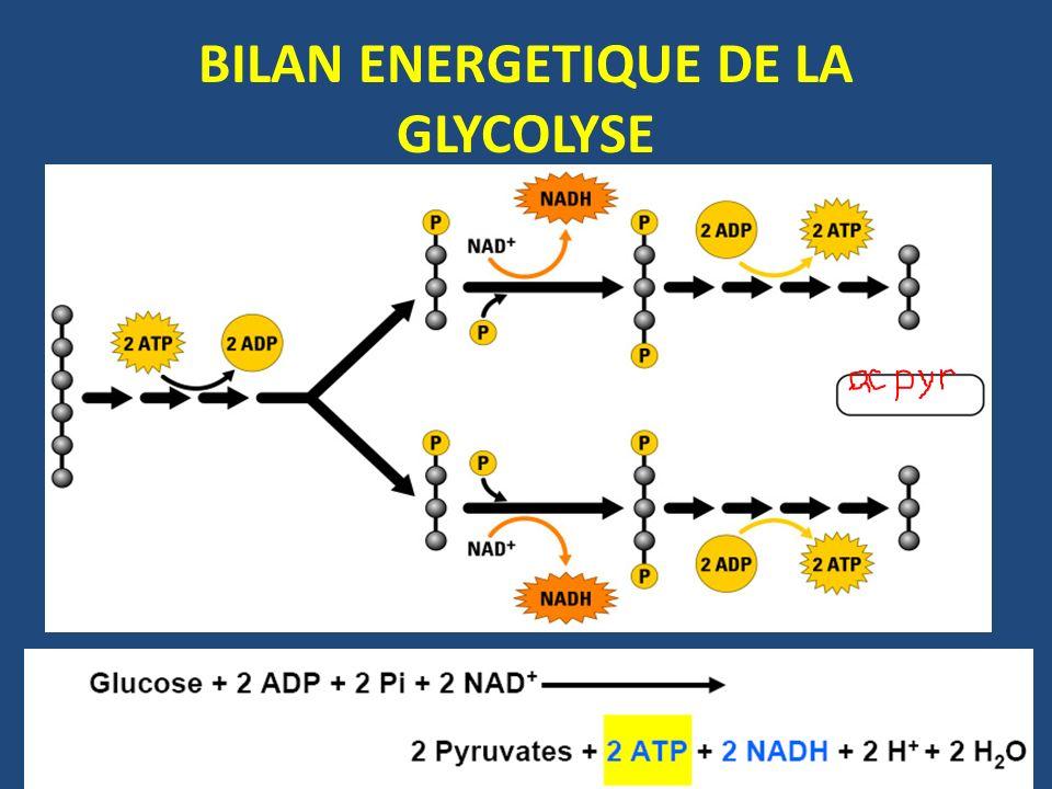 BILAN ENERGETIQUE DE LA GLYCOLYSE
