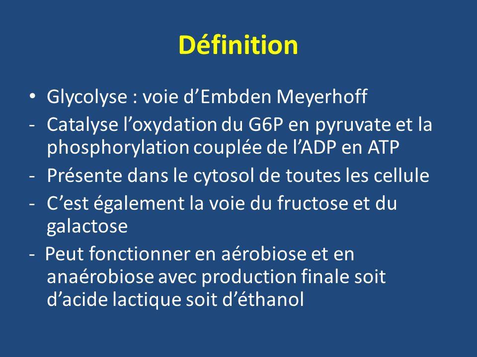 Définition Glycolyse : voie d'Embden Meyerhoff