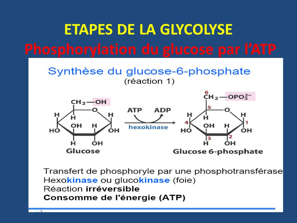 ETAPES DE LA GLYCOLYSE Phosphorylation du glucose par l'ATP