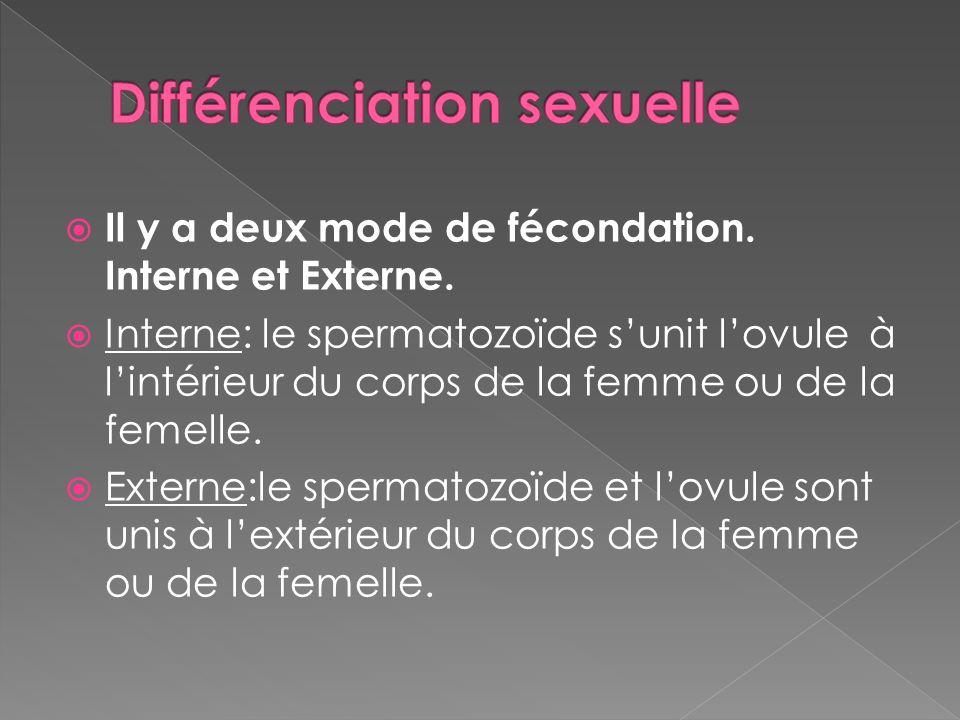 Différenciation sexuelle